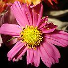 Fallen Pollen by Allison  Flores