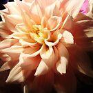 Portrait of a flower by Allison  Flores