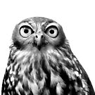 Whoo You Callin A Wise Guy? by Marion  Cullen