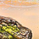 Aruba by Hilm3r -