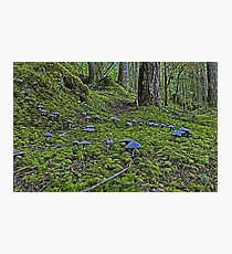 Fairy Ring Photographic Print