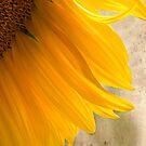 Sunflower Shadows by Zoe Marlowe