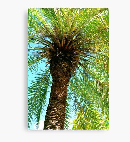 Pretty Palm View Canvas Print
