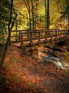 The Bridge Above Ozone Falls... by Aaron Campbell