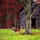 Buck by Ole Barn by Terri~Lynn Bealle