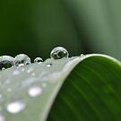 Drops Of Iris by MissyD