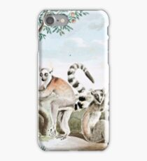 Ring-Tailed Lemurs Illustration iPhone Case/Skin