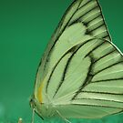 paper-kite-butterfly by aka-sakabato