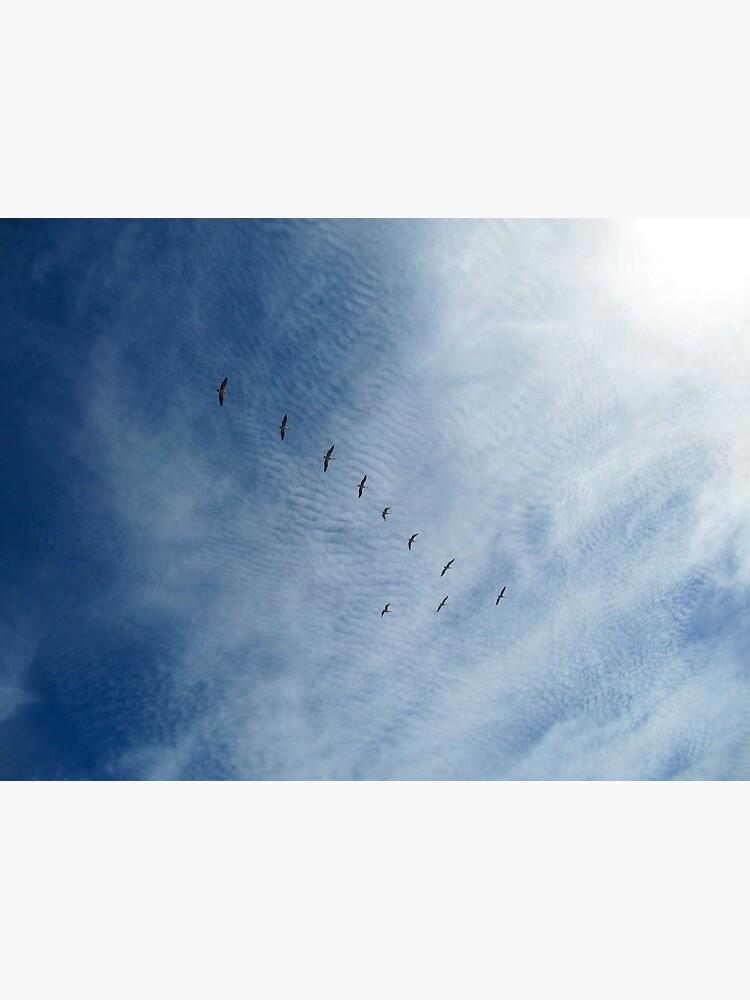 Distant Birds  by Briandamage
