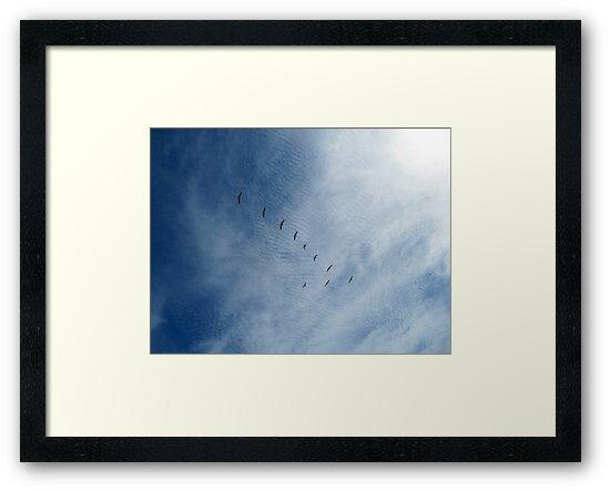 Distant Birds  by Brian Damage