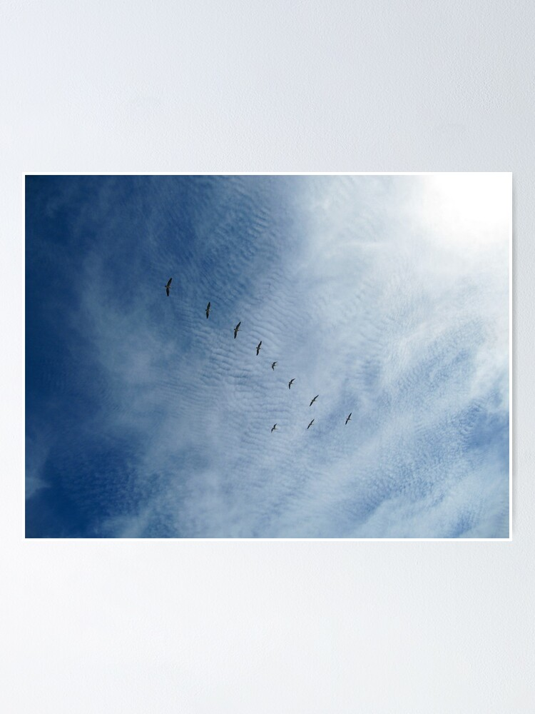 Alternate view of Distant Birds  Poster