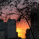 Sydney Sunset by Brian Damage