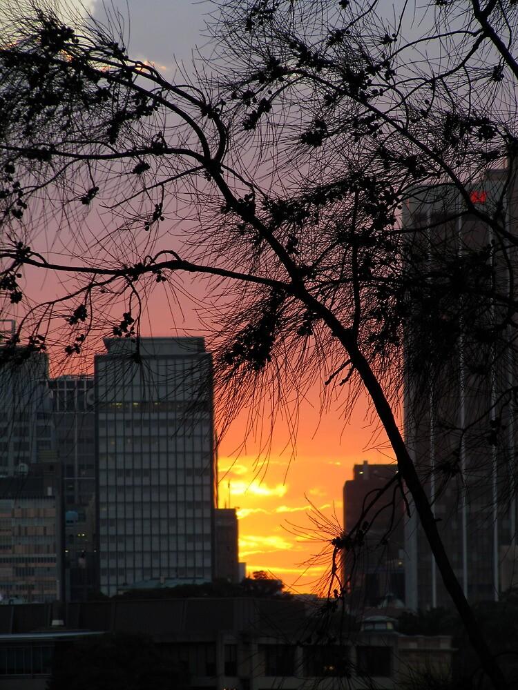 Sydney Sunset by Briandamage