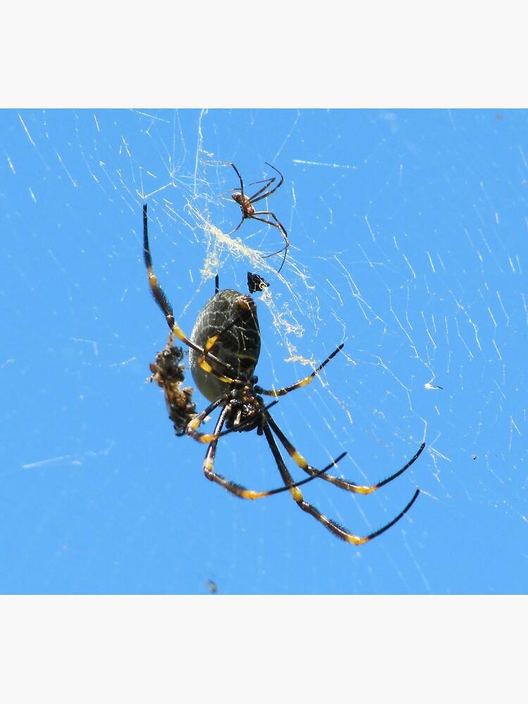 Balfour Spider by Briandamage