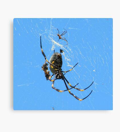Balfour Spider Canvas Print