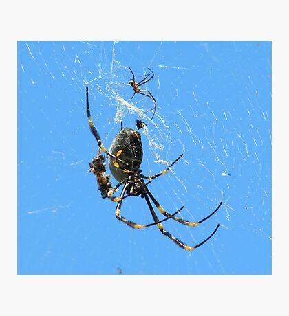 Balfour Spider Photographic Print