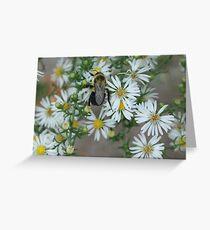 pollinating Greeting Card
