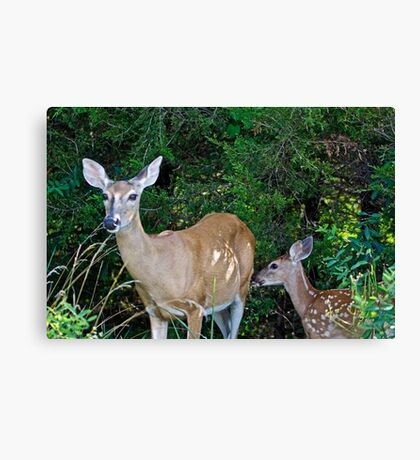 Whitetail Deer Doe and Fawn Canvas Print