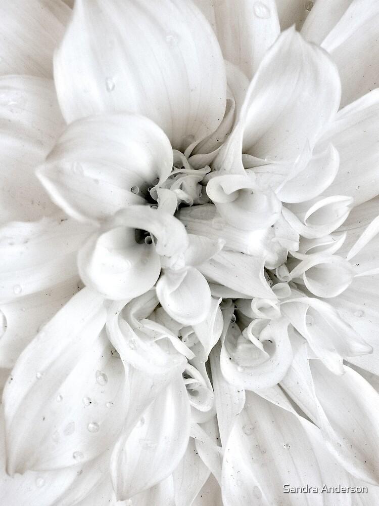 White by sandraanderson