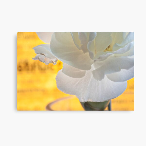 Carnation closeup with yellow background Canvas Print