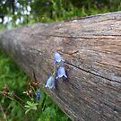 Dead wood, alive flower by Janne Keinänen