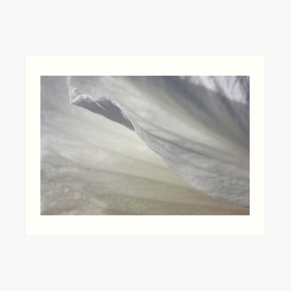 Exquisite lightness Art Print