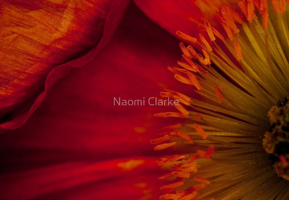 Red Addiction by Naomi Clarke