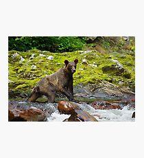 Creek Walker Photographic Print