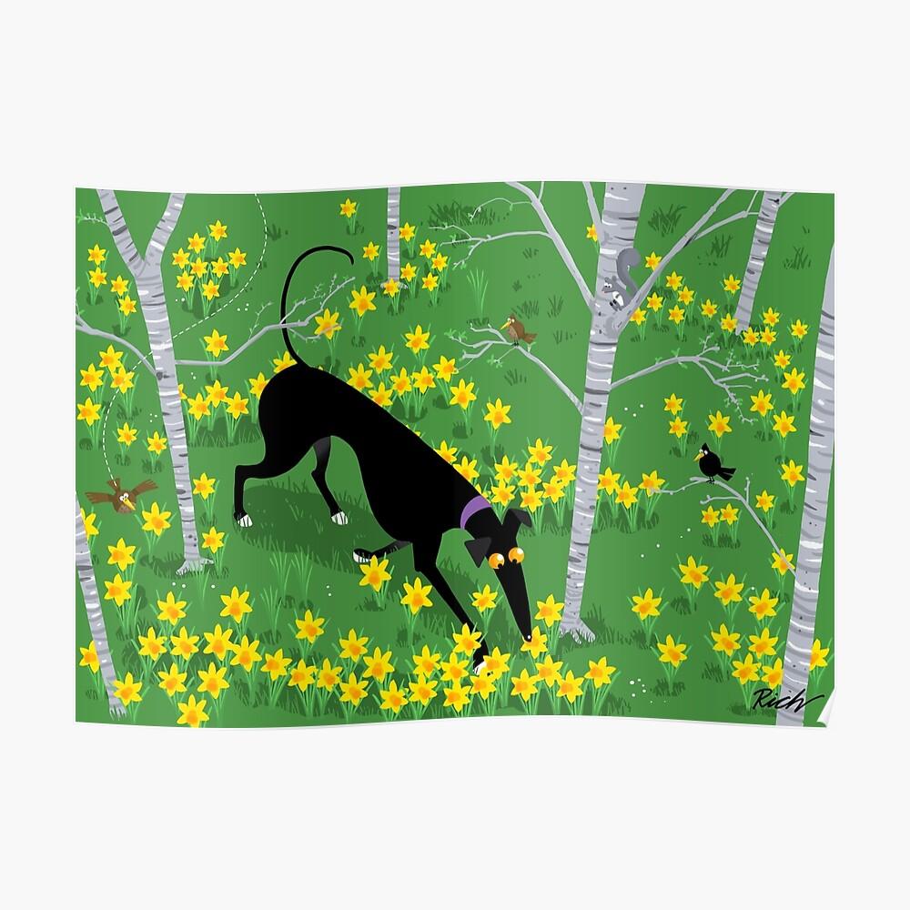 Daffodil Hound Poster