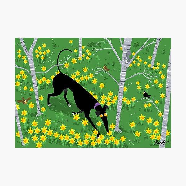Daffodil Hound Photographic Print