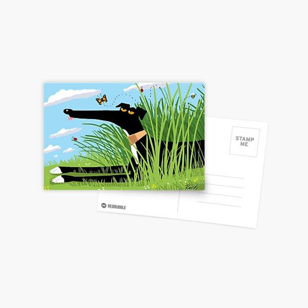 Summer Derp Postcard