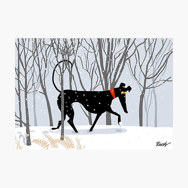 Winter Hound  Photographic Print