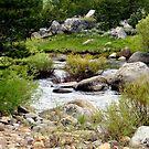 """""""Carson River"""" by Lynn Bawden"""