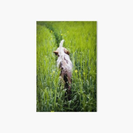 Just trotting along Spinone Art Board Print