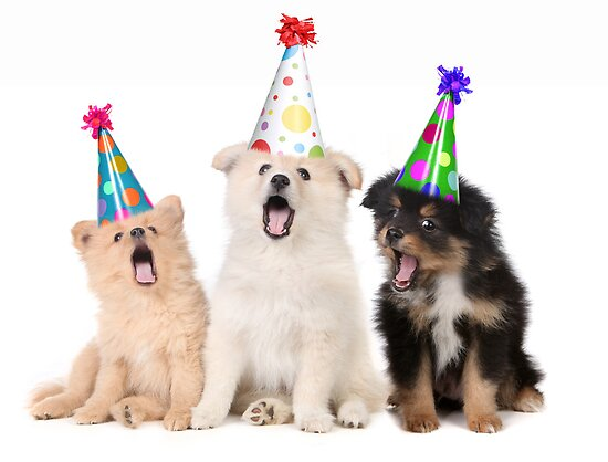 Puppy Dogs Singing Happy Birthday To You