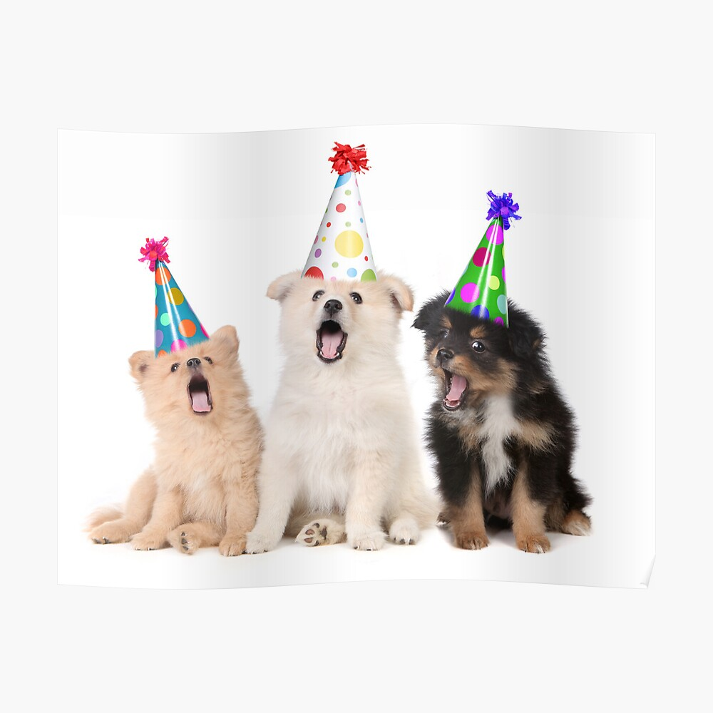 Quot Puppy Dogs Singing Happy Birthday To You Quot Poster By