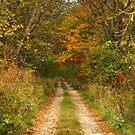 Long Driveway by Teresa Young