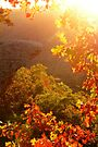 Bit of Light, and Touch of Autumn Colors by NatureGreeting Cards ©ccwri