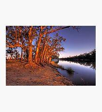 Eucalyptus Sunset - River Murray, Above Renmark, South Australia Photographic Print