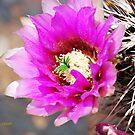 Cactus Bloom by Pat Moore