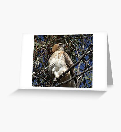 Little Eagle of Foxes Lair Greeting Card
