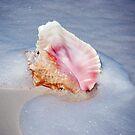 Caribbean Treasure by Carol Barona