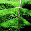 the leaf by Alex Mokrzycki