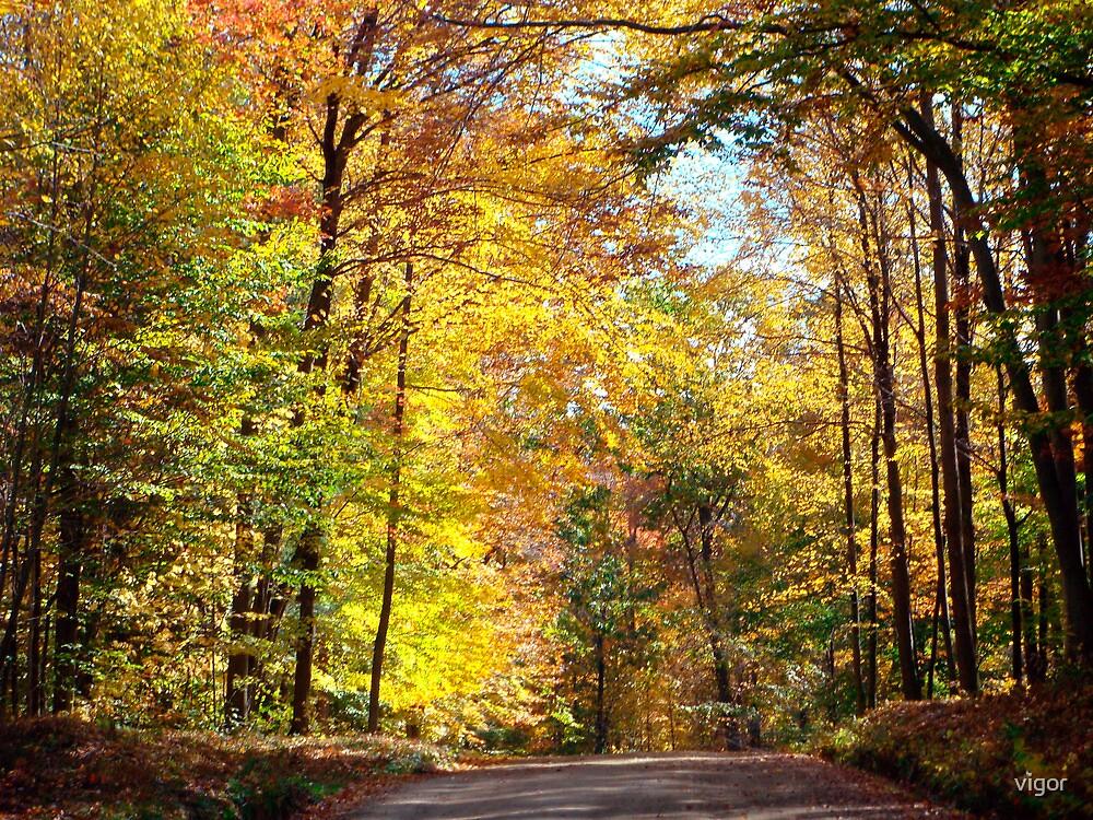 scenic October drive 1 by vigor