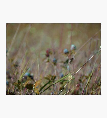 Summer Grass 32 Photographic Print