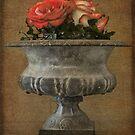 Dry Roses by Jean-Pierre Ducondi