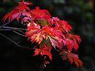 Autumn Magic in Highbury Park by Kyoko Beaumont