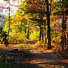 East Bluff Trail by ZombieEnnui