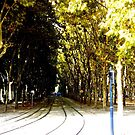 Trees and Tram Tracks... by eithnemythen