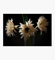 Spotlight Flowers Photographic Print